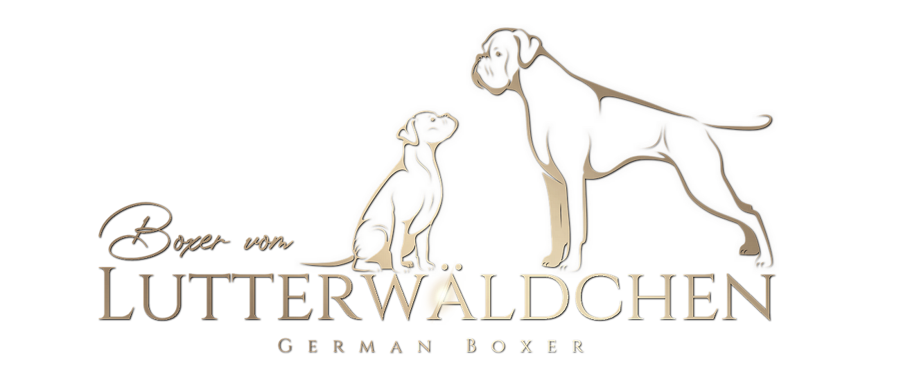 Boxer vom Lutterwäldchen